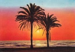 41025- ALICANTE- SUNSET OVER THE SEA - Alicante