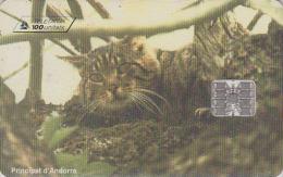 Télécarte à Puce Andorre - Animal - CHAT - CAT Chip Phonecard Andorra - KATZE Telefonkarte - 2765 - Gatos