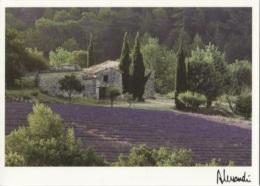 CPM - Photo ALESSANDRI - IMAGES De PROVENCE - Edition Images & Lumières - Illustrateurs & Photographes