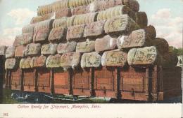 Memphis Cotton Ready Fir Shipment - Memphis