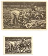 VRESSE-sur-SEMOIS - Une CPA Et Son Snapchots: La Culture Du Tabac Et  La Récolte Du Tabac - Vresse-sur-Semois