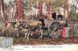 (40) Landes - Dans La Forêt Mise En Barrique De La Résine Résiniers Attelage à Boeufs - 2 SCANS - France