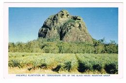 RB 1086 -  Queensland Australia Postcard - Mt Tibrogargan Pineapple Plantation - Australie