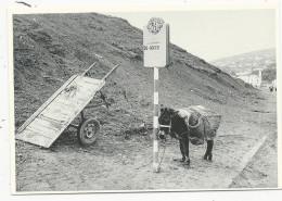 """10x15  Bourriquot  à L""""arret De L""""autobus  Carte De L'Aventure Carto   En 1978 - Tanger"""