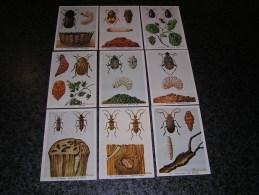 Insectes Nuisibles Capricorne Bruche  9 Chromos Série 2 Chromo Fort Itegem SUPERBES Illustrations De Balaguer Belgique - Autres