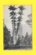 CPA BRESIL - RIO DE JANEIRO - JARDIN BOTANICO 1922 - Rio De Janeiro