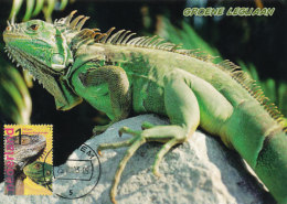 D22994 CARTE MAXIMUM CARD FD 2013 NETHERLANDS - IGUANA BURGERS ZOO CP ORIGINAL - Reptiles & Amphibians