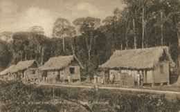 TT DIVERS / A Road Through The Mora Forest / - Trinidad