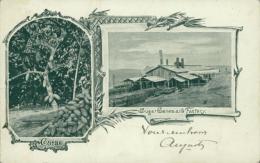 TT DIVERS / Cacao, Sugar Canes And Factory / - Trinidad