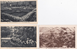 16 / 4 / 342  - VILMORIN-ANDRIEUX  & CIE   -  ( 91 )  3  CPA - Verrieres Le Buisson