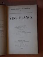 1903 VINS BLANCS COSTE FLORET - Livres, BD, Revues