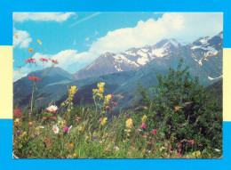 CPM  FRANCE  05  ~  Les ALPES  ~  174  Fleurs Des Champs Au Pied Des Montagnes  ( André 1981 ) - France