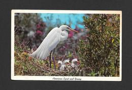 ANIMAUX - ANIMALS - OISEAUX - BIRDS  AMERICAN EGRET AND YOUNG  AT EVERGLADES NATIONAL PARK FLORIDA - BY GULF STREAM CARD - Oiseaux
