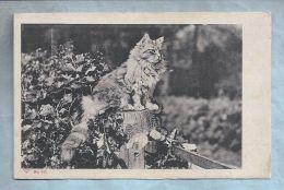 CPA - Fantaisie - Chats - Gros Chat Sur Une Souche - Cats