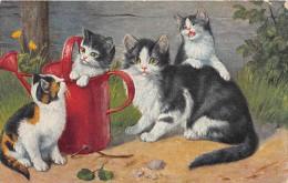 CHATS  -  Jouant Avec Arrosoir - Katten