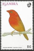 Gambia MNH - Family WAXBILLS + MUNIAS And ALLIES - Red-billed Firefinch (Lagonosticta Senegala ) - Zangvogels