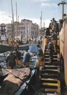 DEBARQUEMENT DE THONS/SAINT JEAN DE LUZ (dil214) - Visvangst