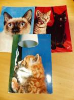 LOT DE 3 CPSM CHATS EN GROS PLANS ECRITES ET TIMBREES - Cats