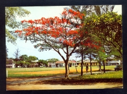 Lagos Flame Tree, Yaba College Of Technology Campus / Postcard Not Circulated - Nigeria