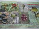 Mustique Grenadines Of St. Vincent-Mushrooms - Champignons
