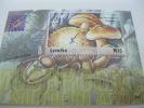 Lesotho-Mushrooms - Mushrooms