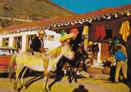 Venezuela Los Andes Local Man On Donkey