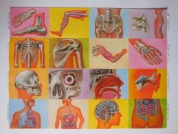 SCRAPS MLP 1478 Skeleton Biology Big  Mamelok Vintage Sheet Decoupis Oblaten Decoupage Glanzbilder - Scrapbooking