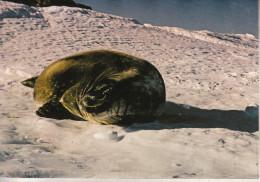 TAFF - Terre Adélie - Pôle Sud - Phoque De Vedell - Collection Privée, Tirage Limité - TAAF : Terres Australes Antarctiques Françaises