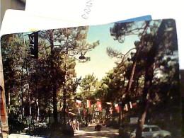 MARINA DI TORRE DEL LAGO PUCCINI  VB1967   FL1248 - Lucca