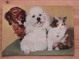 Hund500 : Dackel Und Pudel Und Katze - Col. Ansicht - Popp-Karte Nr. FF 133 - Ungelaufen - Gut Erhalten - Hunde