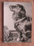 Hund502 : Dackel - Langhaardackel - Popp-Karte Nr. 1684 - Ungelaufen - Gut Erhalten - Hunde