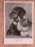 """Hund518 : Dackel Und Katze - """"Gute Freunde !"""" - Gunkel Foto  - Unbeschrieben - Gut Erhalten - Hunde"""