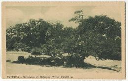 Eritrea Sicomoro Di Debaroa Ficus Vasta  Tipografia Francescana Asmara - Erythrée