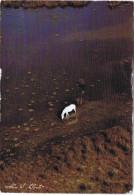 CHAVAUX DE CAMARGUE - Horses