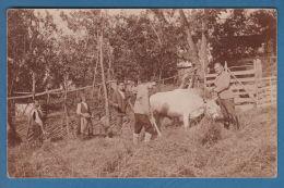 301025  / Village  Raynushkovtsi ( Tryavna Municipality ) - FAMILY , Farmyard CATTLE 1925 , Bulgaria Bulgarie Bulgarien - Bulgaria