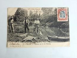 Carte Postale Ancienne : COSTA RICA : Cacena De Lagartos En El Rio Matina, Sello 1907 - Costa Rica