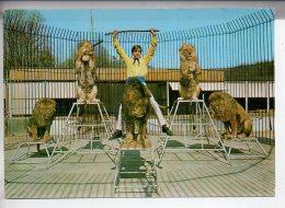 REF 245  : CPSM 72 Saint Rémy Du Val Rochester Zoo Junior Et Ses Lions - France