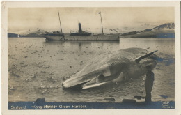 """Svalbard Real Photo """" Kong Harald"""" Green Habour With Ship  Whale And Ducks Peche à La Baleine Edit Eneret Mittet - Norvège"""