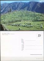 Ak Spanien - La Palma  - El Paso - Panorama - Landschaft - Schafzucht - La Palma