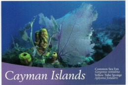 ÎLES CAYMAN. (Caraïbes),  Éponge Tuyau D´orgue & Purple Sea Fan, Carte Postale Neuve Non Circulée Des îles Cayman - Sin Clasificación
