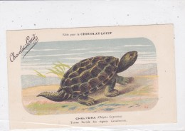 """CARD TARTARUGA-TORTUE """"CHELIDRA""""TORTUE  DI FIUME REGIONI CANADESI PUBB.""""CHOCOLAT LOUIT""""FIRMA E.C. --FP-N-2- --0882-25216 - Tortugas"""