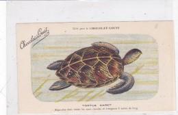 """CARD TARTARUGA-TORTUE """"CARET""""  DIFFUSA  IN TUTTI I  MARI CALDI   PUBB.""""CHOCOLAT LOUIT""""FIRMA E.C.-FP-N-2-0882-25219 - Tortugas"""