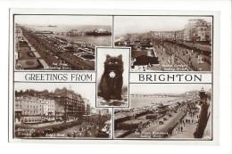 14426  - Greetings From Brighton Chat Noir - Brighton