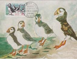 FRNCE   CARTE MAXIMUM OISEAUX - Vögel