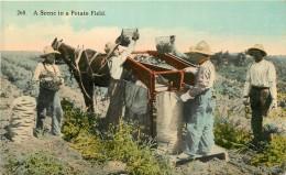 A SCENE IN A POTATO FIELD . PUBLISHED BY SPOKANE POST CARD CO. SPOKANE , WASHINGTON - Spokane