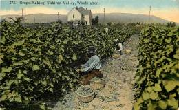 GRAPE PICKING , YAKIMA VALLEY ,WASHINGTON . PUBLISHED BY THE BOUGHTON-ROBBINS CO. SPOKANE. WASH. - Spokane