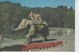 New-zealand   Wellington  Zoo     Kamala The Elephant    38- 42 Yeards  Weight 3.5- 4 Tons - Nouvelle-Zélande