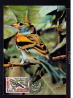 PINSON DU NORD (MONTIFRINGILLA) EXPHIMO'90  Oiseaux Birds Faune Animals Animaux 1990 Maximum Card LUXEMBOURG Mc568 - Unclassified