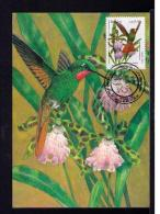 Clytolaema Ribricauda NATIONS UNITS Brapex VIII-91 Oiseaux Birds Faune Animals Animaux TRIPLE Maximum Card BRAZIL Mc565 - Birds