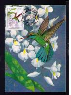 Chlorostibon Aureoventris Pucherani NATIONS UNITS Brapex VIII-91 Oiseaux Birds Faune TRIPLE Maximum Cards BRAZIL Mc566 - Birds